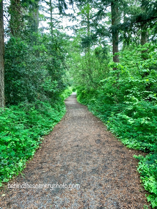 Same trail in the woods. May 12, 2020