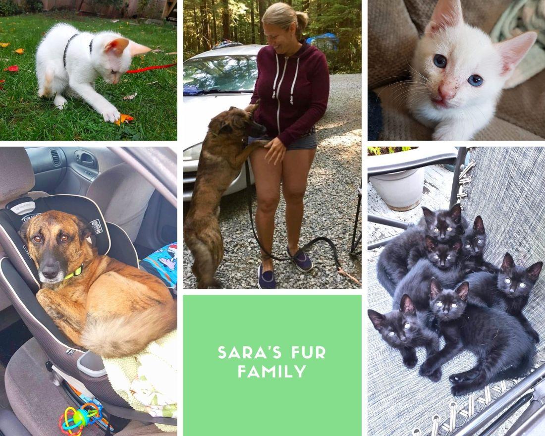 Sara's fur family